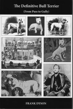 Madmen galore by Simon Parsons #dogs #BullTerriers