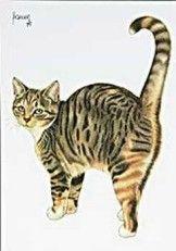 Postkaarten Francien's Katten Francien Westering, van C8092 Postkaarten, Tekeningen, Dieren, Katten,