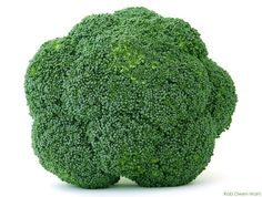 How to Grow Broccoli Indoors in Containers. As part of our ongoing look at growing vegetables indoors, today we are taking a look at growing broccoli in containers. If you haven't seen it before, you might want to read our growing guide on growing broccol Indoor Vegetable Gardening, Container Gardening, Organic Gardening, Gardening Tips, Growing Vegetables Indoors, Growing Tomatoes In Containers, Grow Tomatoes, Baby Tomatoes, Gardening Vegetables