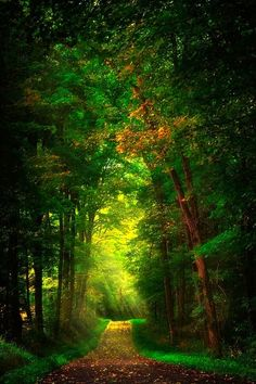 .Where will the way take me?..