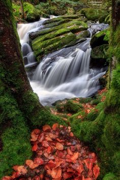 "Photo ""♪ River Serpentine ♪"" by gael photo.com (@gaelphotocom) #500px"