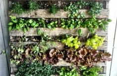 How to Build a Vertical Wooden Pallet Herb Garden.jpg