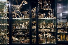 Morbid Anatomy: The Vrolik Museum, Amsterdam, Re-designed and Re-opened!