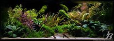 Valley to the East...aquariums as art