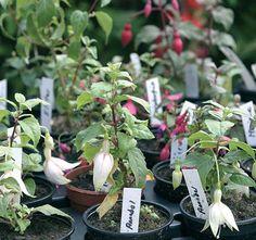 Verenpisaran kasvatus: Onnistu Pirjon kasvatusvinkeillä - Suomela #verenpisara-aita