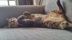 Momo Cat | Pawshake