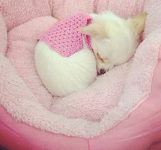 Would love to take a nap with this cutie...