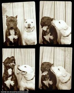 Dogs In Photo Booth