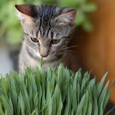 Cat (Stock Photo By [ID: - stock. Love Pet, I Love Cats, Cool Cats, Happy Animals, Animals And Pets, Cute Animals, Cattery, Healthy Pets, Little Pets
