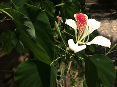 Mexican white and red flower Flower Photos, Red Flowers, Bouquet, Mexican, Plants, Life, Bouquet Of Flowers, Bouquets, Plant