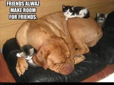 Just Dog :- FRIENDS ..
