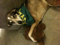 My Baylor Bear!