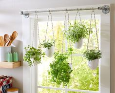 This simple herb hanging idea uses a steel pipe, rope, and glazed planters to make a stunning indoor garden display. This simple herb hanging idea uses a steel pipe, rope, and glazed planters to make a stunning indoor garden display. Culture D'herbes, Hanging Herbs, Indoor Hanging Plants, Hanging Herb Gardens, Hanging Pots, Indoor Plant Decor, Wall Hanging Plants Indoor, Window Herb Gardens, Diy Hanging Planter