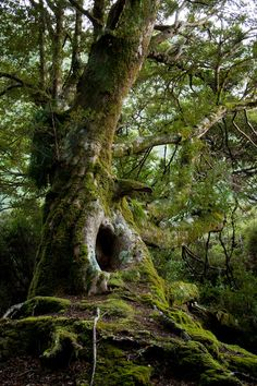 Find images and videos about nature, tree and forest on We Heart It - the app to get lost in what you love. Mother Earth, Mother Nature, Dame Nature, Old Trees, Walk In The Woods, Tree Forest, Forest Fairy, Nature Tree, Jolie Photo