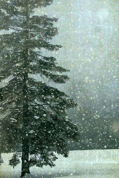 winter snow fir pine tree landscape photography fine art photograph home decor office decor I Love Snow, I Love Winter, Winter Snow, Winter Christmas, Winter Green, Magical Christmas, Snow Scenes, Winter Scenes, Landscape Photography
