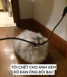 Animals And Pets, Funny Animals, Cute Animals, Troll Face, Cute Stickers, Cool Cats, Memes, Anime, Pretty Animals