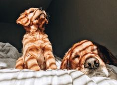Com - favourite thing - - Adorable Animals - Hunde bilder Cute Baby Animals, Animals And Pets, Funny Animals, Cute Dogs And Puppies, I Love Dogs, Doggies, Puppies Puppies, Cute Creatures, Dog Lovers