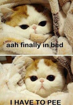 Hahaha this happens all the time..M.T.: This is too funny because iit isn't my pet, it's ME !! LOL!! With my 10 pillows of assorted shapes & sizes and my sheet, blanket and quilt,plus baby blanket just fot my shoulders Once I get in and all my pillows are propping up the appropriate body part, it really SUCKS when I realize I forgot to go pee and I might as well get right back up because it's not going to go away!