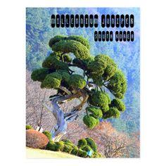 Cartão Postal Zimbro do milênio South Korea, 1, Plants, Pictures, Centre, Photography, Postcards, Acre, Korea