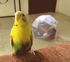 That bird is so happy to fly without flapping. Bird tongs! bidQykH.gif (500×438)