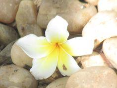 flower of monsoon