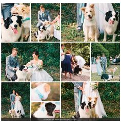 """Our two border collies, Kiara & Kovu as our """"best dog"""" (dog ring bearers) at our wedding. They were perfectly behaved! Custom collars & leads from Bow Wow Couture, Photography by Jodi McDonald Photography, venue is EcoStudio Fellini, Mudgeeraba."""