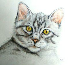 Polychromos pencils portrait, cat by Hina Pet Portraits DM sassosaby@gmail.com