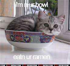 "Ramen Cat!!!  ""Google Images"""