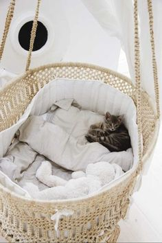 Pamper your pet cat with a cuddly-soft cat bed - cats - Katzen Animal Room, Animals And Pets, Baby Animals, Cute Animals, Kitten Beds, Cat Beds, Biking With Dog, Animal Gato, Cat Room