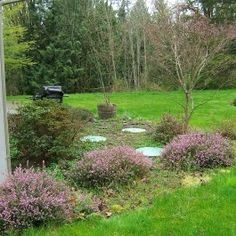 landscaping around septic lids