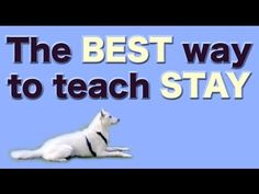 The BEST and FASTEST way to teach STAY - Dog training Obedience Positions - YouTube