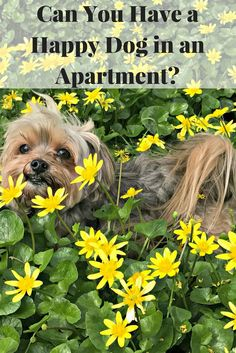 People often think you need a yard to have a dog. Or a house. Can you have a happy dog in an apartment or is it not fair to the dog?