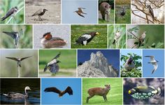 Visit my portfolio @fotolia by Adobe #bird #animal #wildlife #nature #microstock #dennis #Jacobsen https://eu.fotolia.com/p/201591017