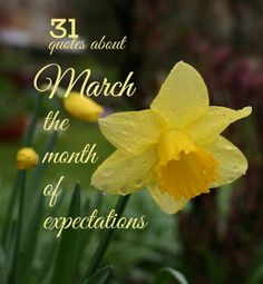 The daffodil is the official flower of the month of March. (Photo by Bertil Videt) Month Of March Quotes, Hello March Quotes, March Month, New Month, Share Poetry, National Nutrition Month, Beginning Of Spring, Bullet Journal Books, Kew Gardens