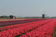Typisch holländisch - Erlebnispark Land van Fluwel