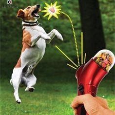 WOW!!! COOL!!!!...Get This New Treat Launcher & Have Some Fun With Your Dog Today!!!