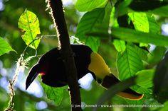 DSC 0326 A Taste of Costa Rican Wildlife from La Selva Biological Station