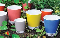 Pantone pots. because it already seems as though my life is run by Pantone.