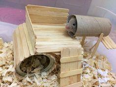 Hamster House (Not yet finished) - DIY - Salud de las Mascotas Diy Hamster House, Hamster Diy Cage, Hamster Life, Hamster Habitat, Hamster Stuff, Syrian Hamster Toys, Pet Mice, Pet Rats, Baby Hamster
