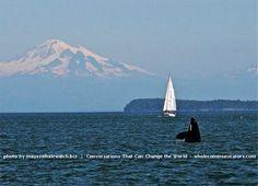 Whale pod off San Juan Islands Washington state