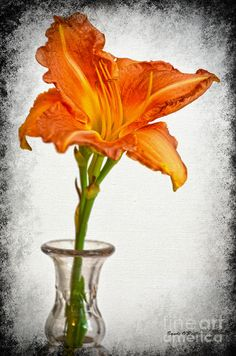 Stand Out Lily Photograph by Sandi OReilly