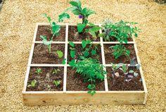 The magic of micro-gardens