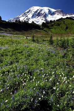 Mt. Rainier from the Skyline Trail - it looks like this in late July. #nwtrips