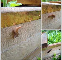 http://m.ebay.com/itm?itemId=291167685202  Cobber slug tape - kobber tape mod snegle