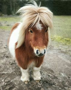 Messy hair don't care! Messy hair don't care! The post Messy hair don't care! appeared first on Mary& Secret World. Baby Animals Super Cute, Cute Little Animals, Cute Funny Animals, Most Beautiful Horses, Pretty Horses, Animals Beautiful, Baby Animals Pictures, Cute Animal Pictures, Animals And Pets