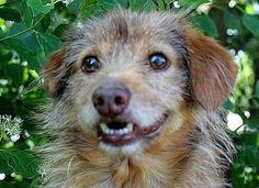 La timida Lilla. adozioni@leudica.org