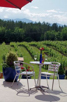 Overmountain Vineyard and Winery in the Tryon Foothills Wine Country near Asheville NC