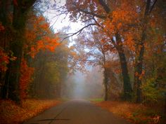 Foggy East Texas road. Sometimes this speaks to us concerning our individual lives. Beauty and an obscure  destination at the same time.