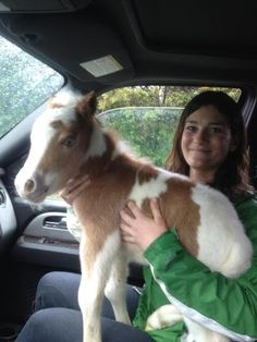 OMG I NEED A BABY MINI HORSE :O
