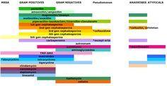 spectrum of antibiotics - Google Search